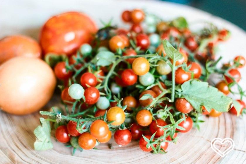 tomates del patio-2